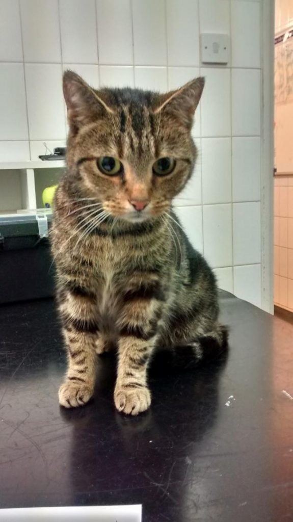 Missing Cat found at M40 Beaconsfield Services